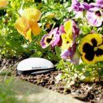 koubachi_outdoor_garden2